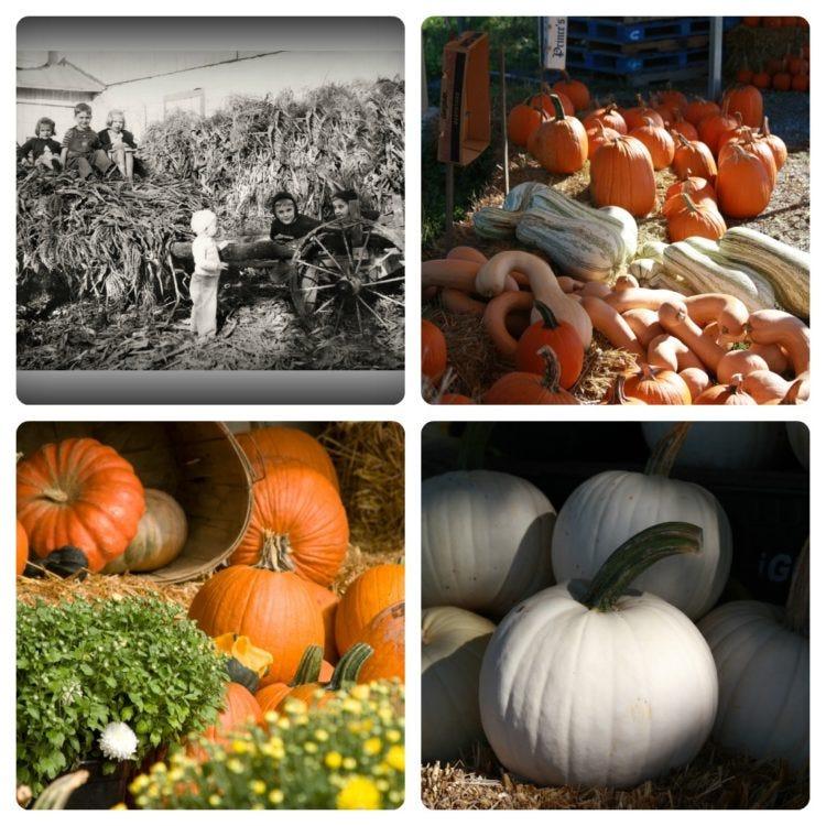 Autumn in Lancaster - Pumpkins