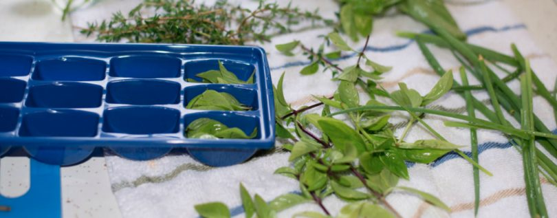 Freezing Herbs in Ice Tray