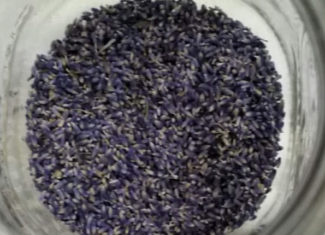 Lavender buds for Lavender jelly