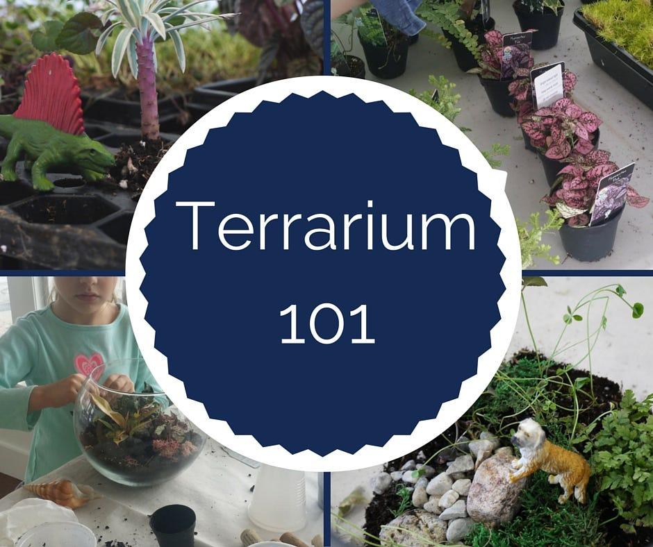 Terrarium-101-2_20-2