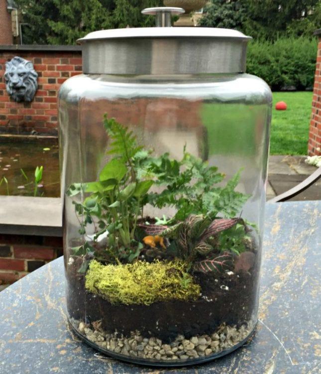 grow and glow terrarium instructions