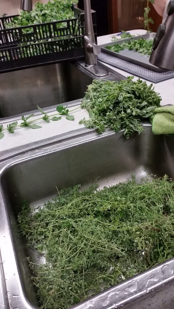 Washing Herbs