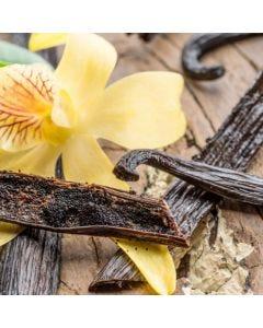 Exotic Vanilla Fragrance Oil - TruScent - Fillmore Container