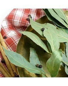 Bayberry Cinnamon Fragrance OilTS062