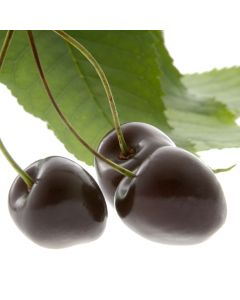 Black Cherry Fragrance OilTS093