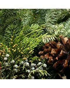 Cedar Garland Fragrance OilTS038