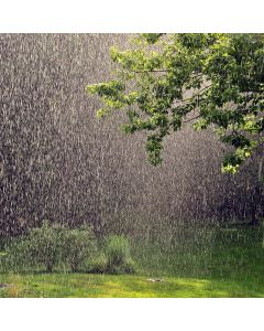 Fresh Rain Fragrance OilTS100