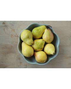 Pear Vanilla Caramel Sauce – Canning Workshop